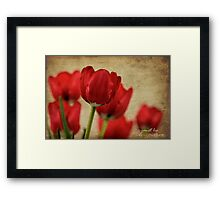 tulipes rouges Framed Print