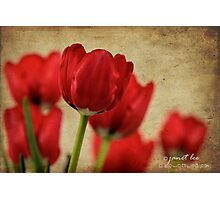 tulipes rouges Photographic Print