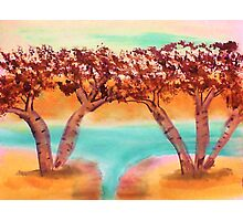 Birch trees by water in watercolor Photographic Print