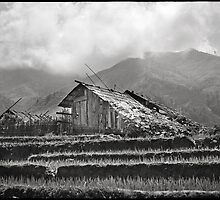 'Room with a View: Rice Paddies.' Sapa, Vietnam by RyanEdwardson