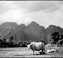 'Mother and Babies: Water Buffalos.' Don Det, Laos by RyanEdwardson