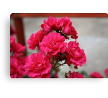 Pretty Pink Roses Canvas Print