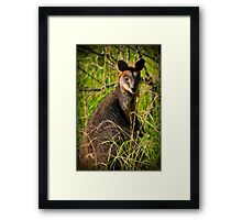 Who are you! Framed Print