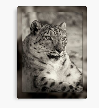 Snow Leopard Abstract Black n White Canvas Print
