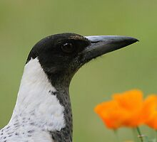 Magpies rule! by Denzil