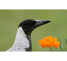 Magpies rule! Photographic Print
