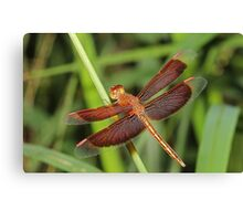 Red and Bronze Dragonfly Canvas Print