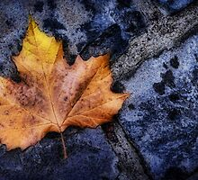Leaf on Cobbles by Stephen Morris