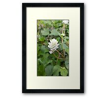 white Grass Flower Framed Print
