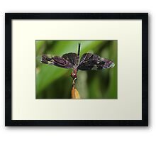 On My Tippy Toes Framed Print