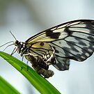 Birth of a butterfly 2 by Lenka