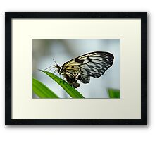 Birth of a butterfly 2 Framed Print