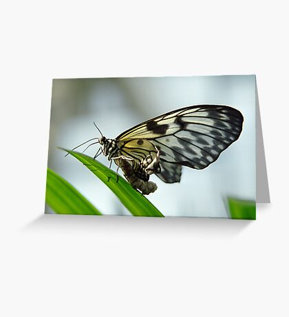 Birth of a butterfly 2 Greeting Card