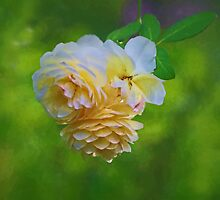 Yellow Roses by Eileen McVey