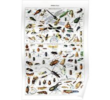 Adolphe Millot Insects Larousse Poster