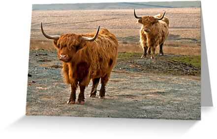 Beautiful Highlanders by Trevor Kersley