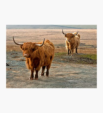 Beautiful Highlanders Photographic Print