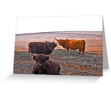 Highlanders on the Hills Greeting Card