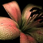 Lily & COLOURS by Vitta