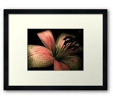 Lily & COLOURS Framed Print