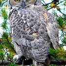 "Grey Horned Owl  ""Who Who Do I see?"" by MaeBelle"