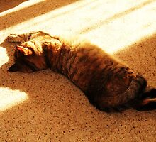 Sun Napping by MichelleRees