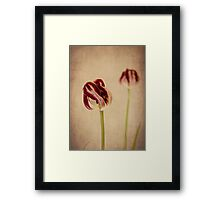 Old Masters - Tulip Framed Print