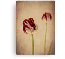 Old Masters - Tulip Canvas Print