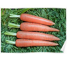 Fresh ripe raw carrot  Poster