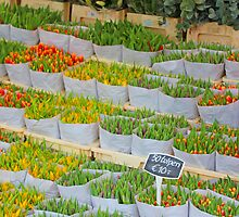 Tulips In The Capital Of Tulips by sceneryphotosto