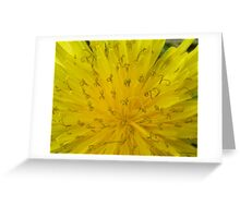 Dandelion In Bloom II Greeting Card