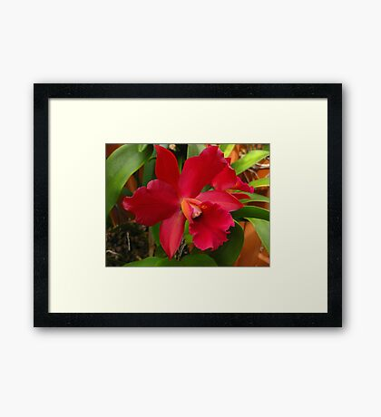 Glorious Orchid Framed Print