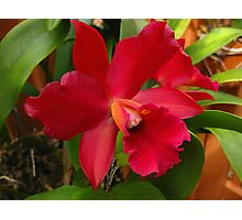 Glorious Orchid Photographic Print