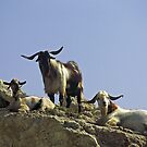 Mountain Goats, Cyprus by Alex Cassels