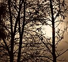 golden evening by Angel Warda