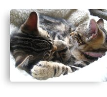 Two Sleepy Kittens Canvas Print