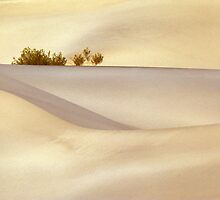 One lone bush in a sea of sand by ©  Paul W. Faust