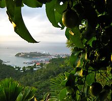 View From A Garden, St Georges Below - Grenada by Lorna81
