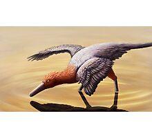 Buitreraptor Photographic Print