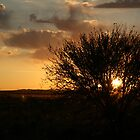 Thorny Croft Sunset... Free State, South Africa by Qnita