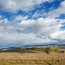 On the road to Bakersfield by Fran0723
