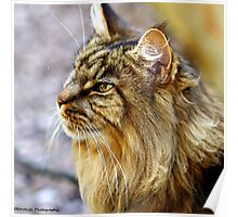 The Cat as a Philosopher - Understanding Poster