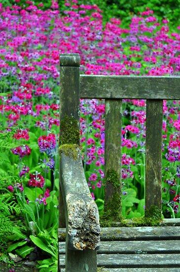 The Old Bench by John Hare