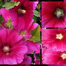 Hollyhocks - Alcea rosea  by Madalena Lobao-Tello