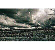 Vineyard Drama Photographic Print