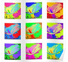 Nine colorful Calla Lilies Poster