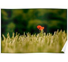 The Last Poppy Poster