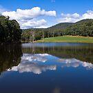 Stanley Forest Waterhole by Jane Keats