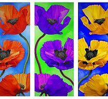 Poppy Parade by Kim Bender