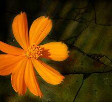 O flower by Sonia de Macedo-Stewart